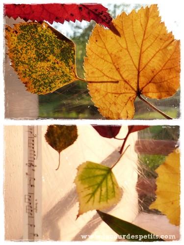 activit d 39 automne des feuilles nos fen tres la cour des petits. Black Bedroom Furniture Sets. Home Design Ideas