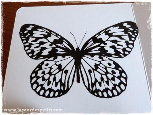 Tana Hoban Noir sur Blanc papillon