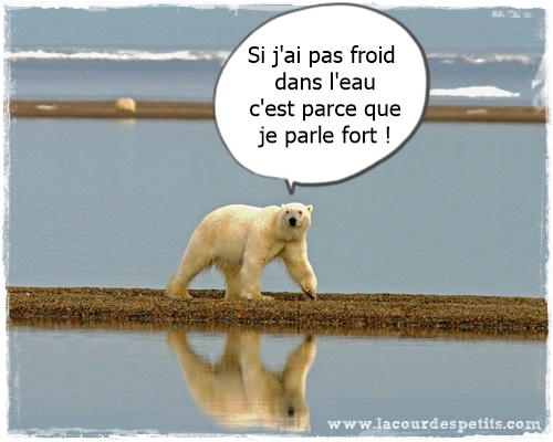 ours polaire drole