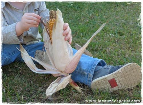 epi maïs motricite fine