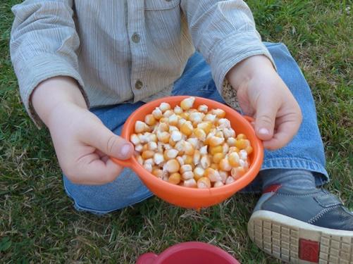 transvasement maïs