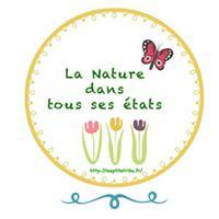 logo nature ptite tribu
