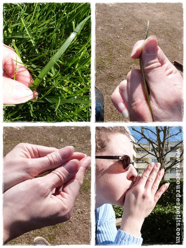 siffler herbe
