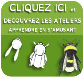 atelier insectes