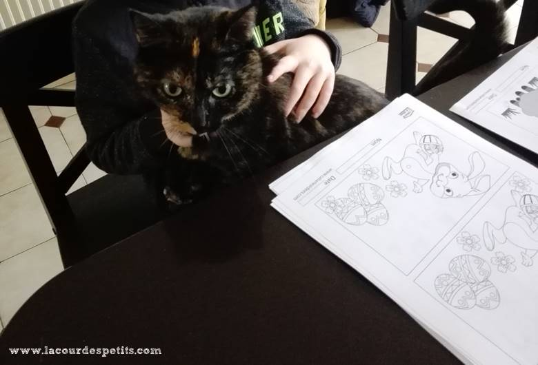 chat et cahier activites